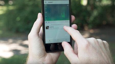 Chemnitz bird spotter app downloaded over one million times